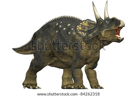 diceratops dinosaur roaring. A herbivorous dinosaur from the Maastrichtian age. Closeup head shot Isolated on white background. Clip art cutout illustration - stock photo