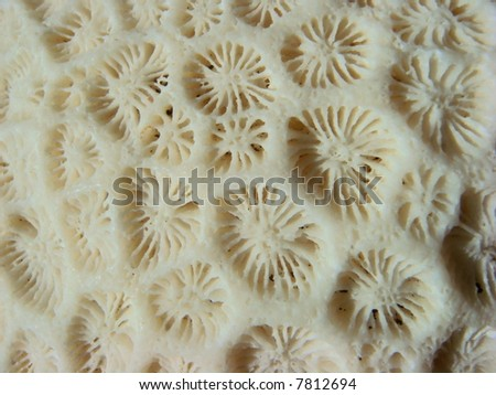 Died Sea coral closeup - stock photo