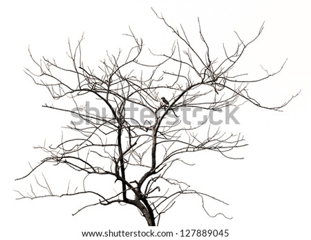 died tree polluted environment - stock photo