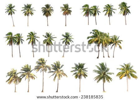 Difference of coconut tree isolated on white. - stock photo