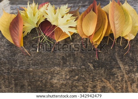 Different autumn leaves lying on tree.  - stock photo