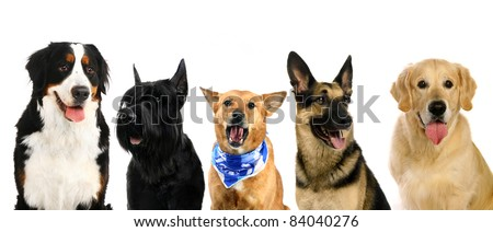 Different breeds of a dogs - stock photo