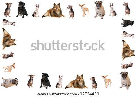 Different breeds of dog like chihuahuas, pugs, and sheltie in the form of a frame or border on a white background - stock photo