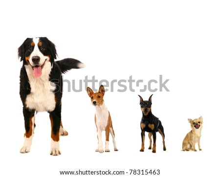 Different breeds of dog on a white background - stock photo