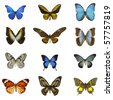 different butterflies with white background - stock photo