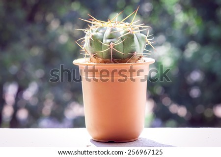 Different cactus plants in flowerpot. Soft focus lights. - stock photo