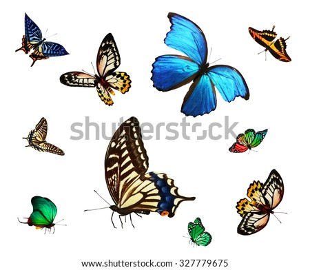 Different color butterflies , isolated on white - stock photo