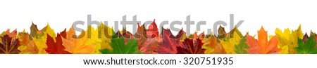 Different colored isolated autumn leaves on the edge - stock photo