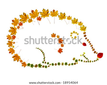 different colors autumn leaves making hedgehog - stock photo