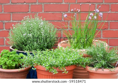 Different culinary herbs in pots - outdoor shot - stock photo