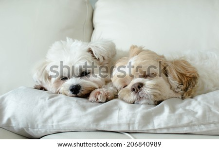 Different dog breeds. best friends - stock photo
