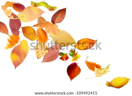 Different falling autumn leaves on white background - stock photo