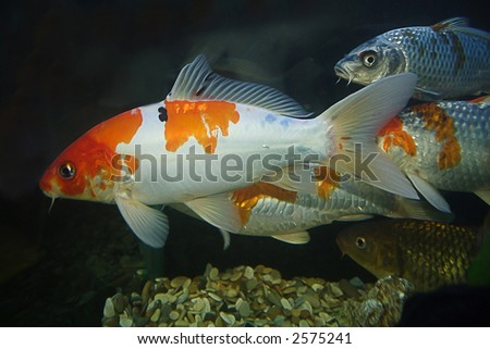 Different fishes - stock photo