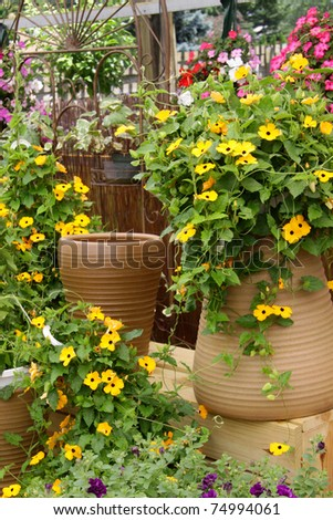 Different flower pots in a green house in spring time - stock photo