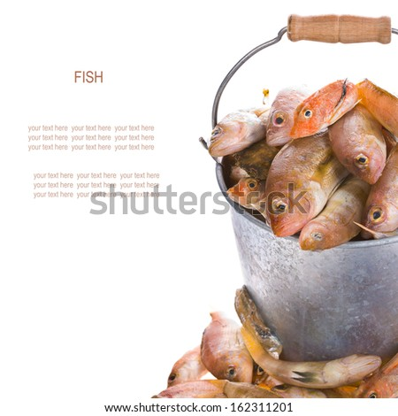 Different fresh marine fish in the pail, isolated on white background