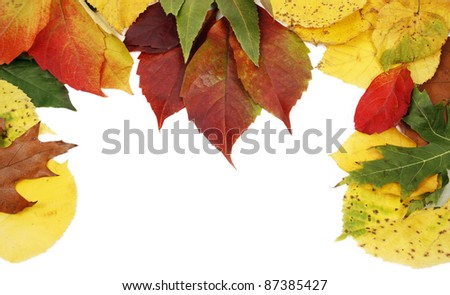 Different kind of leaves isolated on white background - stock photo