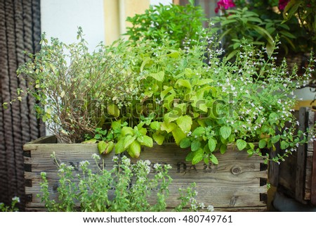 Different kinds of herbs grow outdoors in a wooden box. Also available in vertical format.