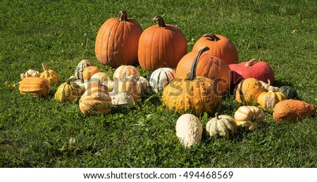 Different kinds of pumpkin lying on display in the grass