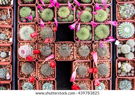 different kinds of small cactuses on market counter, top view - stock photo