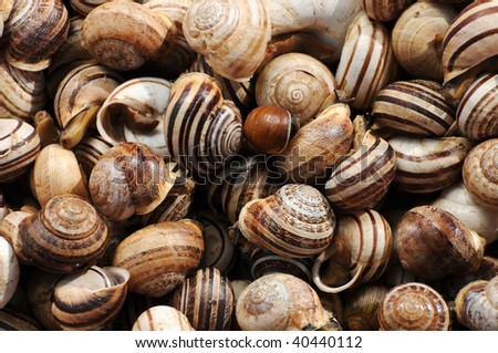 different kinds of snails shot from the up side - stock photo