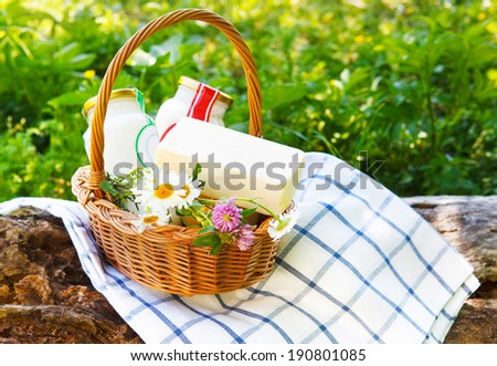Different milk products: cheese, cream, milk, oil. On a nature background