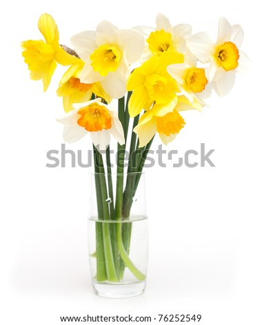 different narcissus flowers on a glass on white background