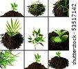 different plants - stock photo