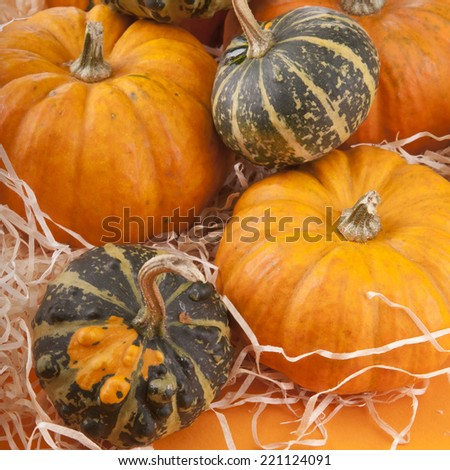 Different Pumpkin still life for Halloween - stock photo