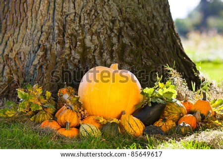 different pumpkins lying in grass before oak tree as autumn background, space for text