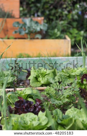 Different raised beds in a garden - stock photo