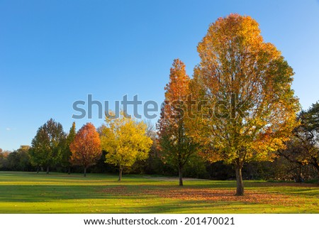 Different shades of Autumn - stock photo