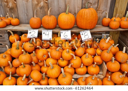 different size pumpkins with price tags - stock photo