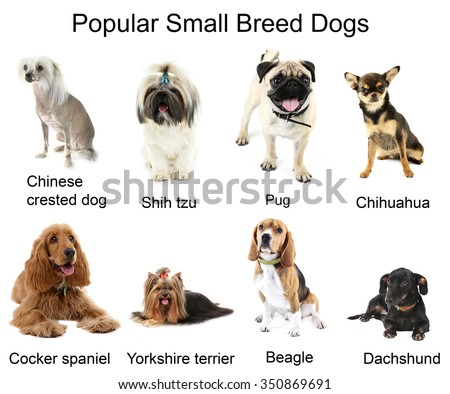 ... Photos Types Of Breeds Of Dogs Dog Breeds Chart Small House Dog Breeds
