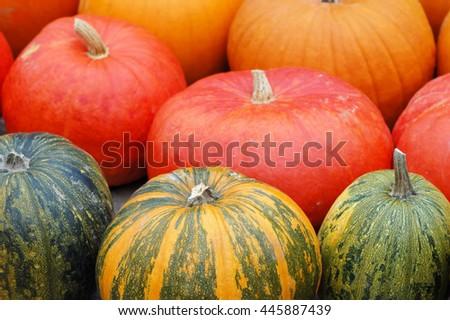 different sorts of pumpkins fullframe