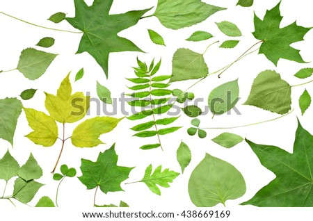 different summer leaves isolated on the white background - stock photo