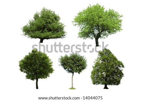 different tree isolated on white - stock photo