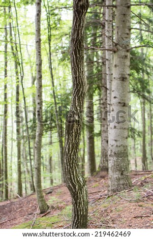 Different tree trunk in the forest - stock photo