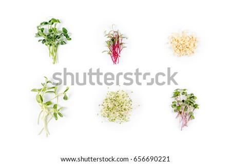 Different Types Micro Greens On White Stock Photo Royalty Free