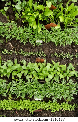 Different vegetable seedlings growing in rows marked with labels - stock photo