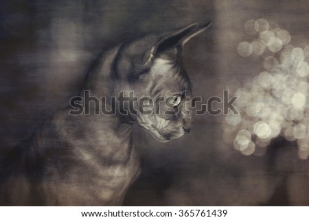 Digital art, paint effect, Portrait of Baby Sphynx cat, Brown mackerel tabby, yellow eyes