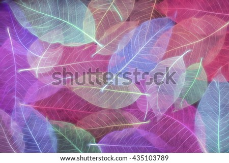 Digital art textures composition, Abstract colorful Skeleton magnolia leaves