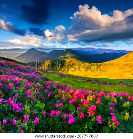 Digital artwork in watercolor painting style. Magic pink rhododendron flowers on summer mountain - stock photo