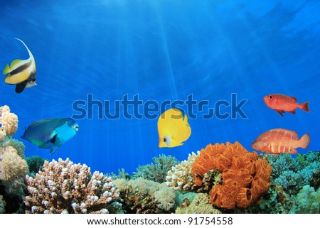 Digital Composite of Coral Reef with Tropical Fish in clear blue water - stock photo