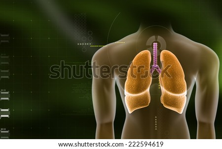 Digital illustration of a human body and lungs - stock photo