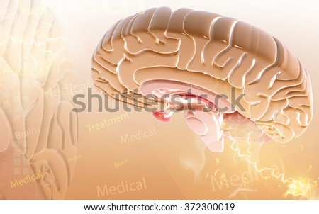 Digital illustration of  brain in color  background  - stock photo