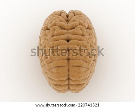Digital illustration of brain in white background  - stock photo