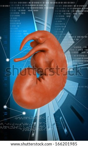 Digital illustration of Embryo  in colour background  - stock photo