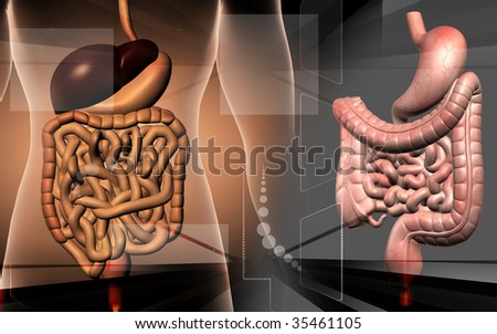 Digital illustration of human digestive system