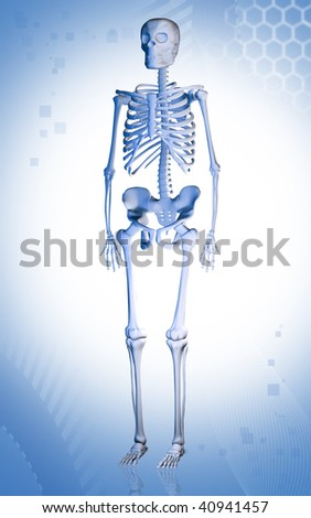 Digital illustration of human skeleton in colour background