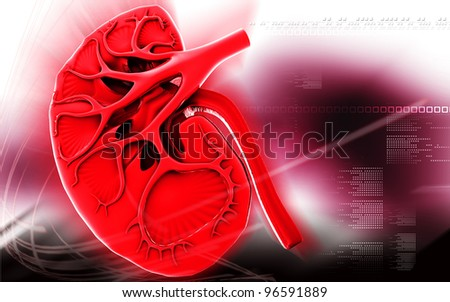 Digital illustration of kidney in colour background